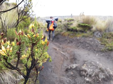 Trekking in High Mountain Natural Park of Los Nevados - Coffee Region - Colombia - High Mountain - Tourist Plan - Coffee Tour