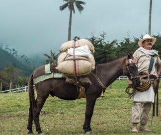 Arriero paisa en el Valle del Cocora — Eje Cafetero, Colombia