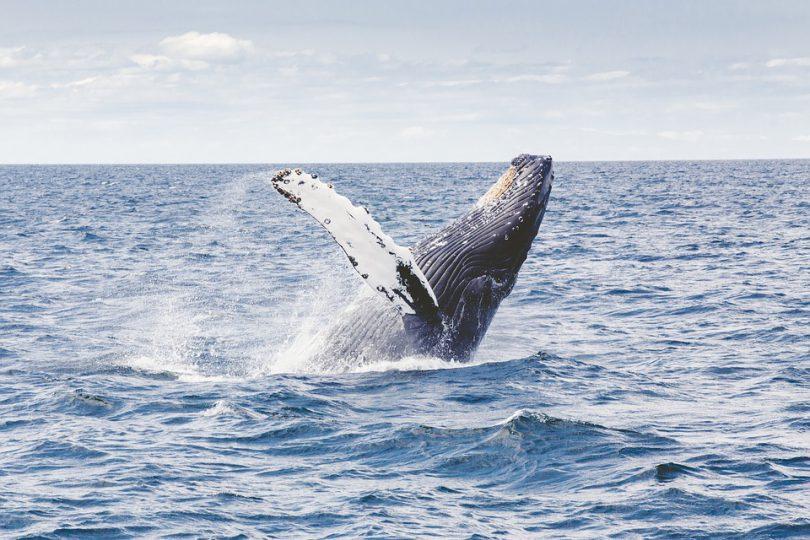 Nuquí, un paraíso de ballenas