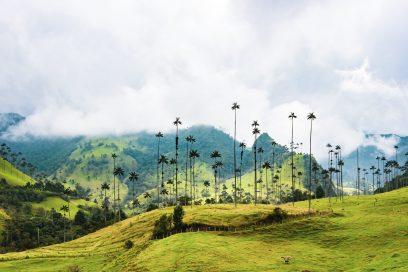 Valle de Cocora - Salento Quindio Colombia - Planes de Viaje