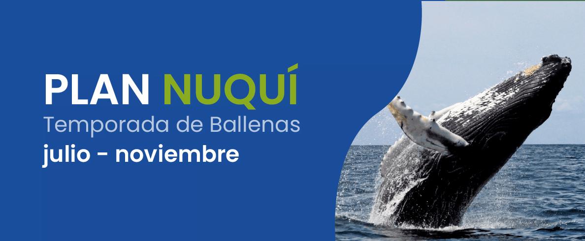 Nuquí - Pacífico Colombiano - Colombia - Viajes - Ballenas Jorobadas