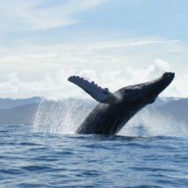 avistamiento de ballenas bahia solano 1 300x300 1