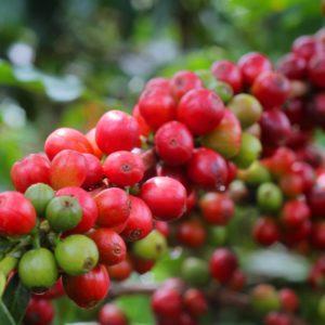 Café Colombianos - El mejor café del mundo - Viajar a Colombia - Planea tu viaje a colombia - ColombiaTours.Travel