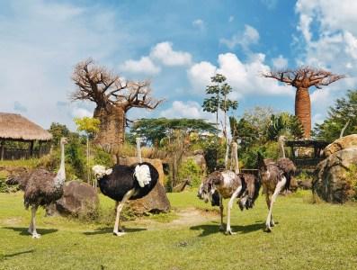Avestruz - BioParque Ukumarí - Planea tu viaje a Colombia con ColombiaTours.Travel