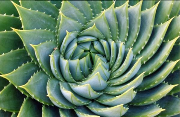 Gidoctor 5 Amazing Medicinal Plants Grow In Backyards