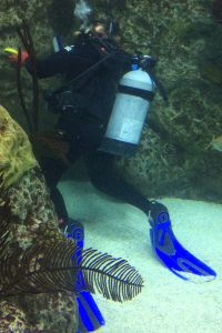 Divers at the National Aquarium - Field Research
