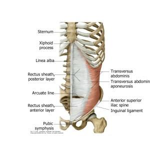 diastasi dei retti robot e REPA, diastasi addominale, diastasi dei retti