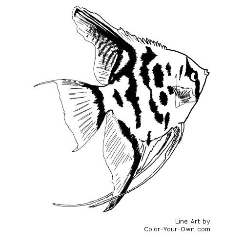 Freshwater Angelfish Coloring Page
