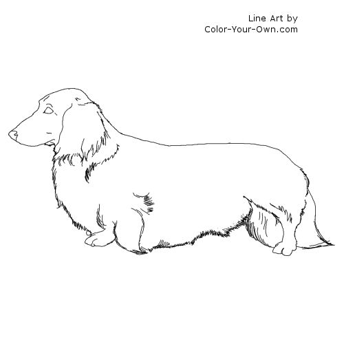 Longhaired Dachshund Dog Coloring Page