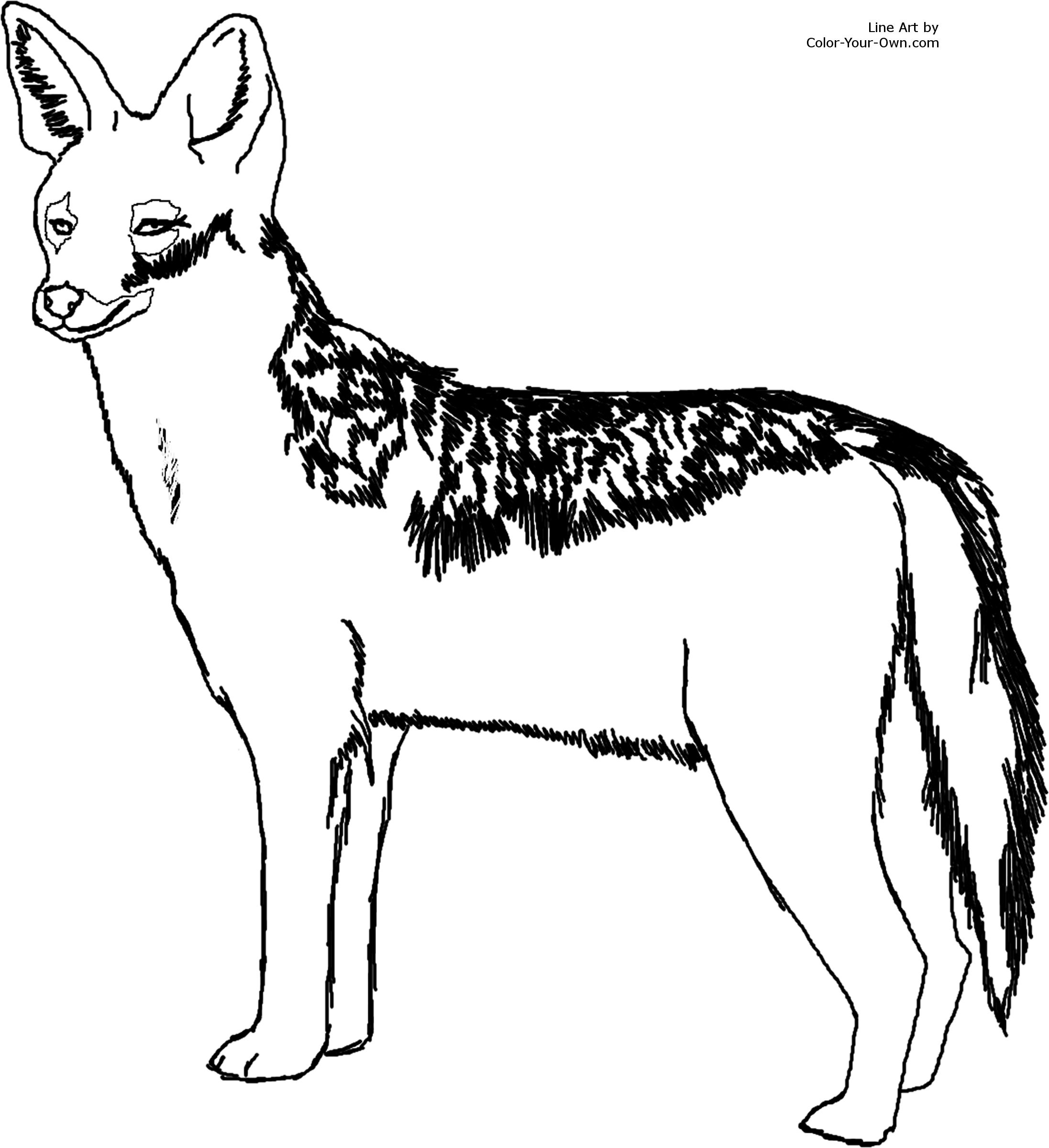 Jackal Coloring Pages