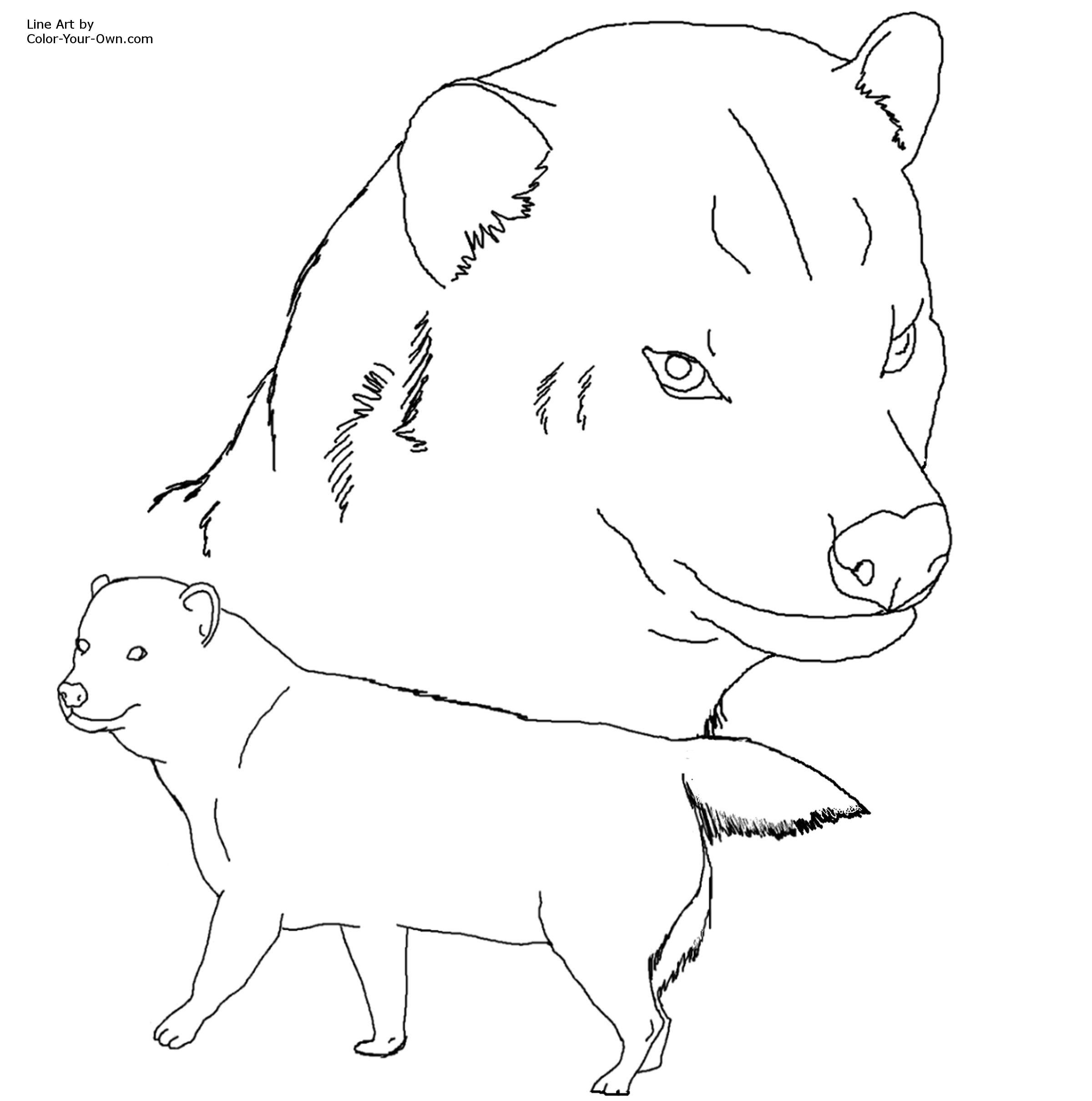Bush Dog Coloring Page