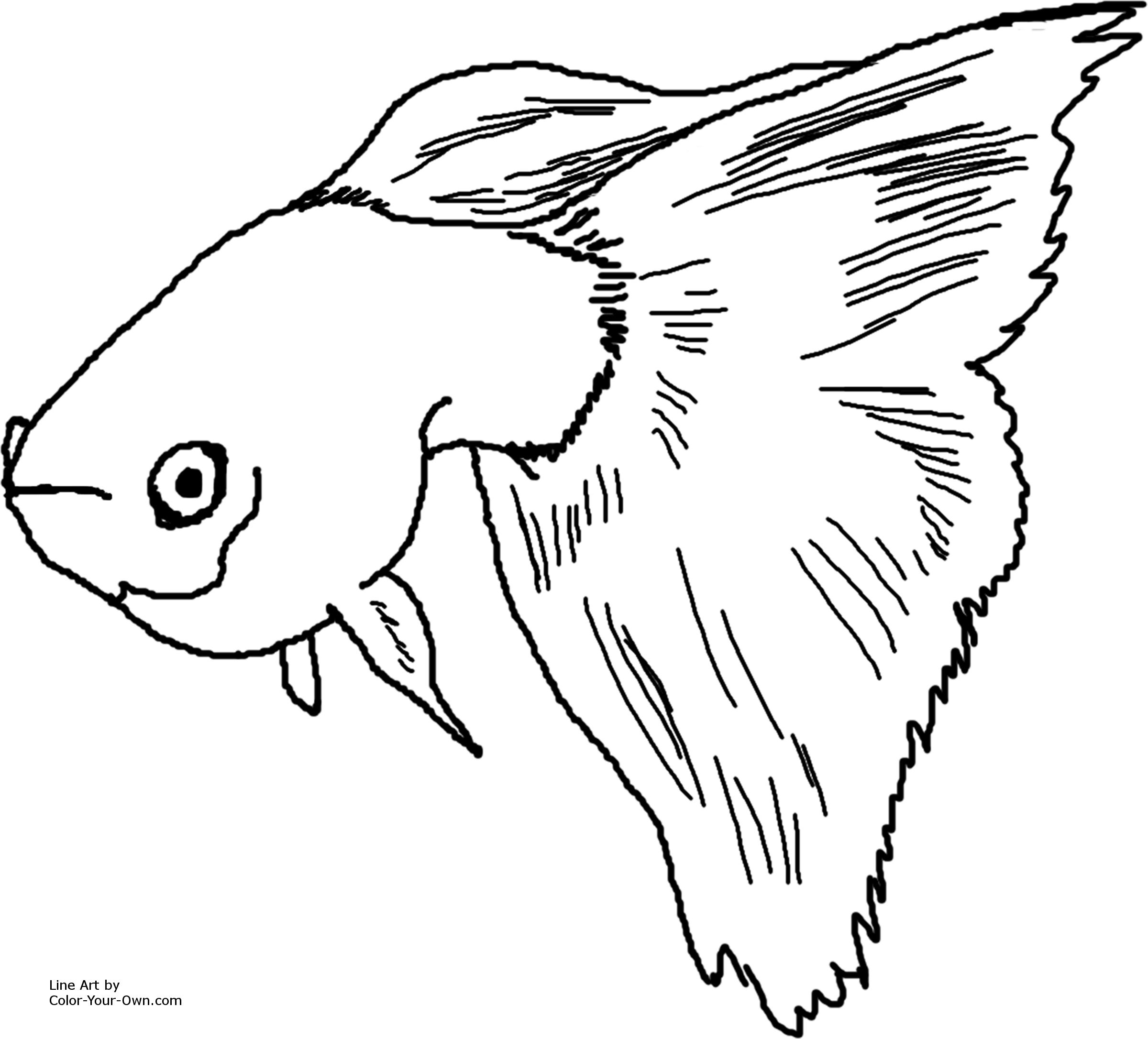 How to draw fish guppies
