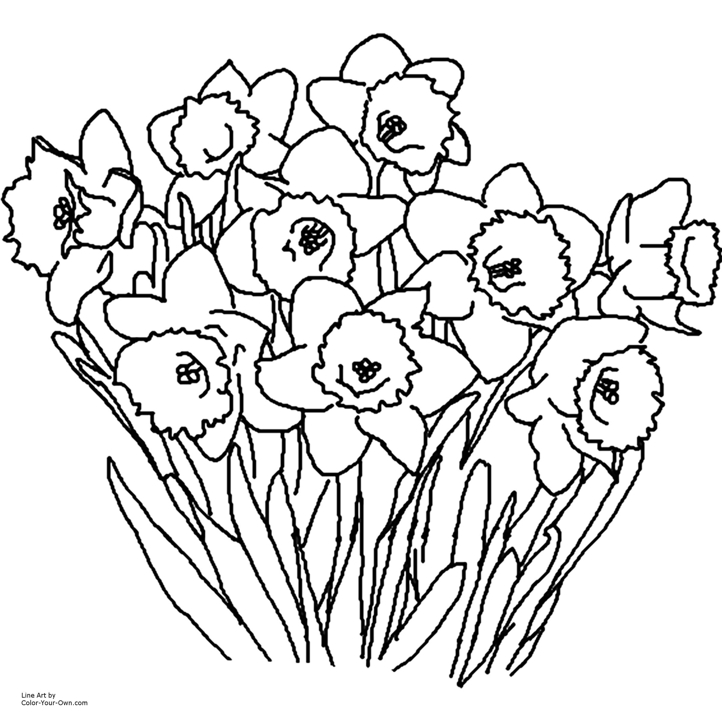 Daffodil Spring Flower Coloring Page