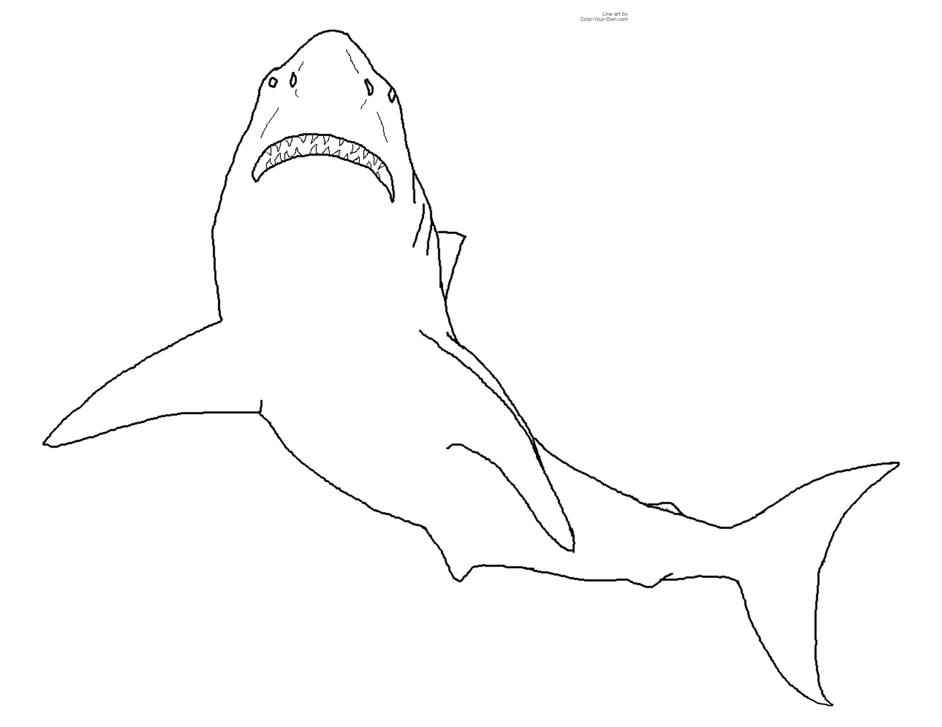 Great Picture Printable Shark White 9jasports