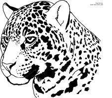 Jaguar Head Coloring Pages