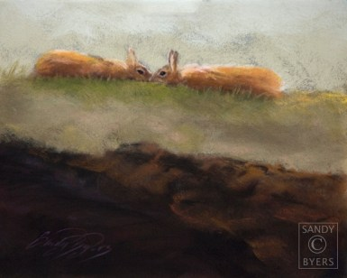 """High Bunnies SOLD (11x14 dry pastel). These two bunnies were """"dancing"""" outside my studio window. I feel fortunate to have captured their embrace just before they jumped about two feet in the air and scurried off chasing each other around in circles again. The wild rabbits that visit us are such a wonderful, playful, source of entertainment!"""