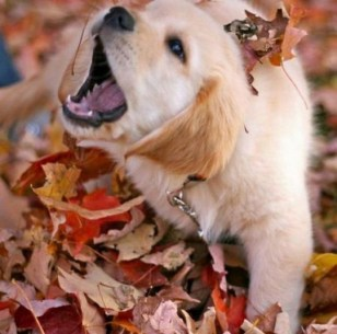 Leaf covered puppies