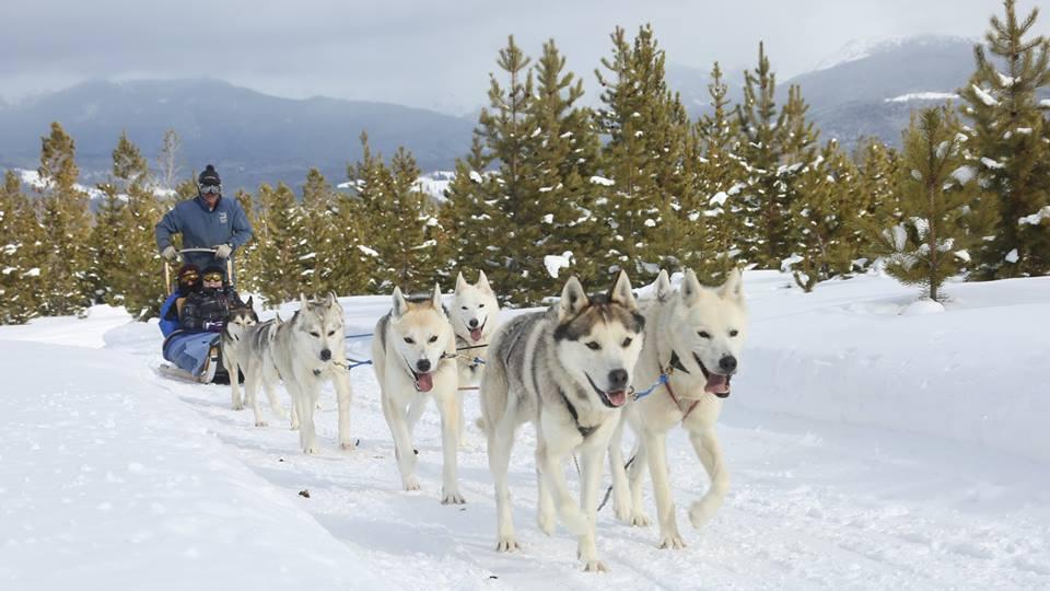 Where to Go Dog Sledding in Colorado