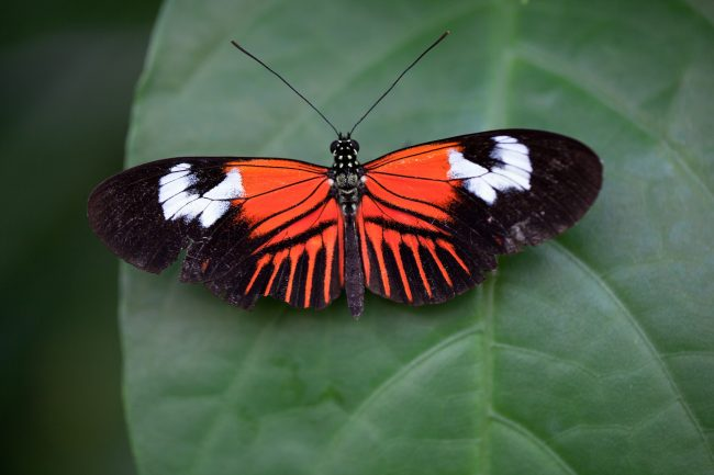 The Butterfly Pavilion In Westminster Potentially