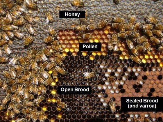 196f97f92afae3dfa6417d8aa7d4612b--honey-bee-hives-honey-bees