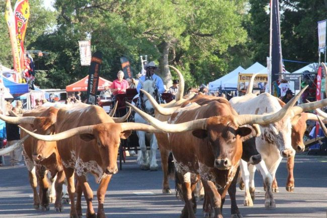 Ultimate Guide To The 2018 Greeley Stampede