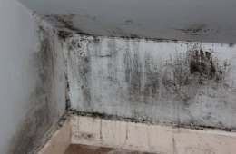 The Dangers of Mold, According to the CDC