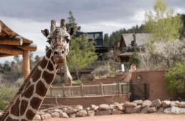 oldest giraffe in north america