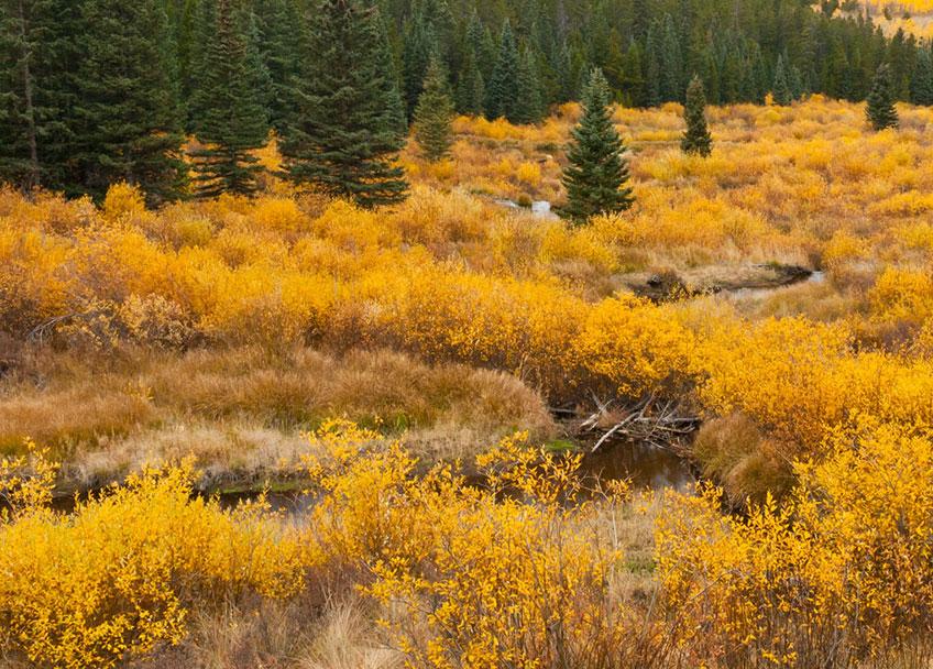 Riparian  Colorado Birding Trail