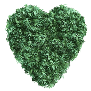 Premium producer of 100% organic CBD and HEMP products - Colorado Blossom