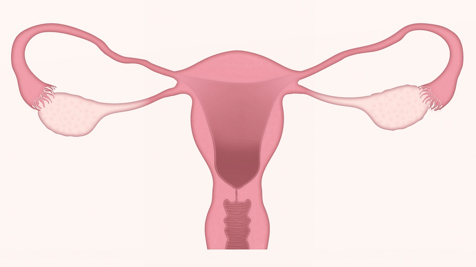 Endometrial cancer clinical trial aims to pave the way for practice-changing therapy