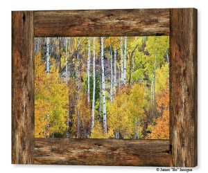 Colorful Aspen Forest Rustic Cabin Window View Canvas Print