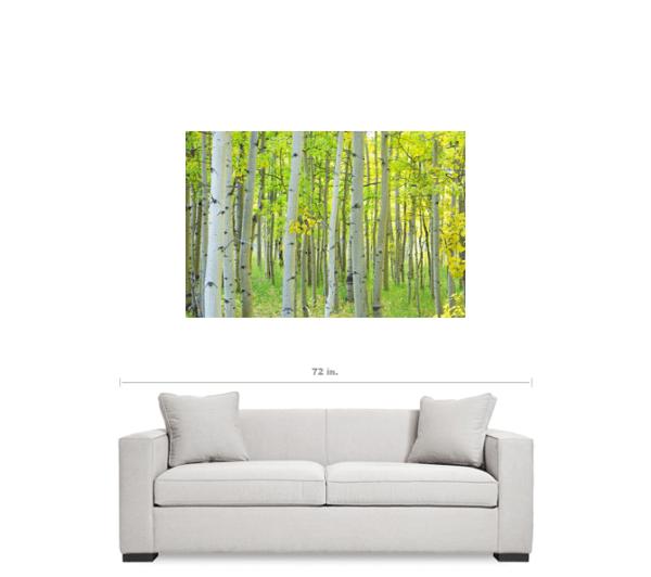 "Autumn Time Aspen Tree Forest 32""x48""x1.25"" Premium Canvas Gallery Wrap"