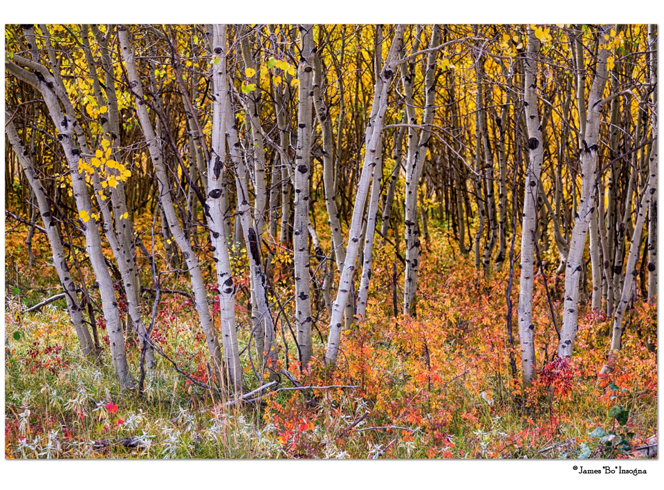 "Wonderful Autumn Forest Wonderland 32""x48""x1.25"" Premium Canvas Gallery Wrap Art"