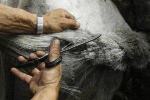 horse-trail-getting-cut-off