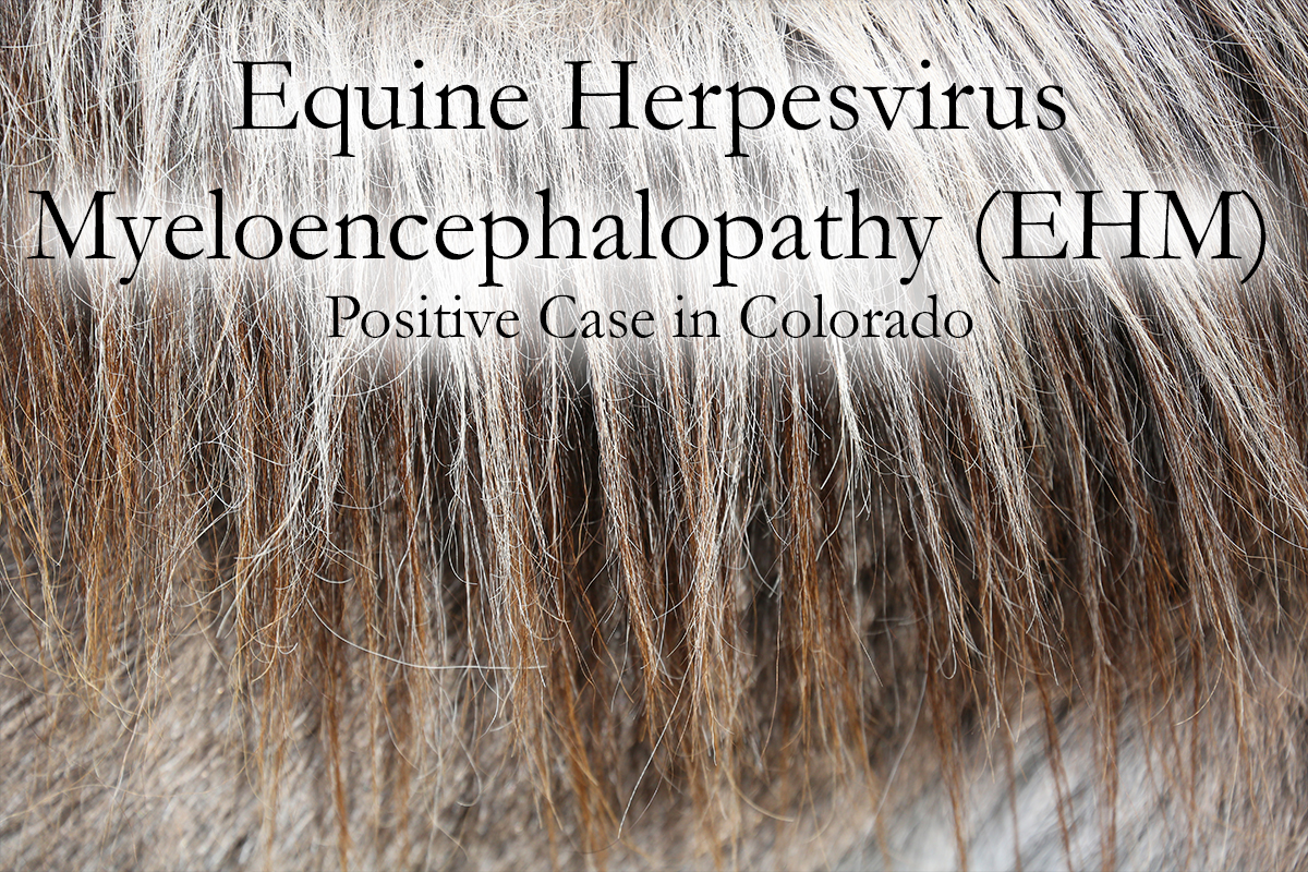 EHV - Equine Herpes Virus