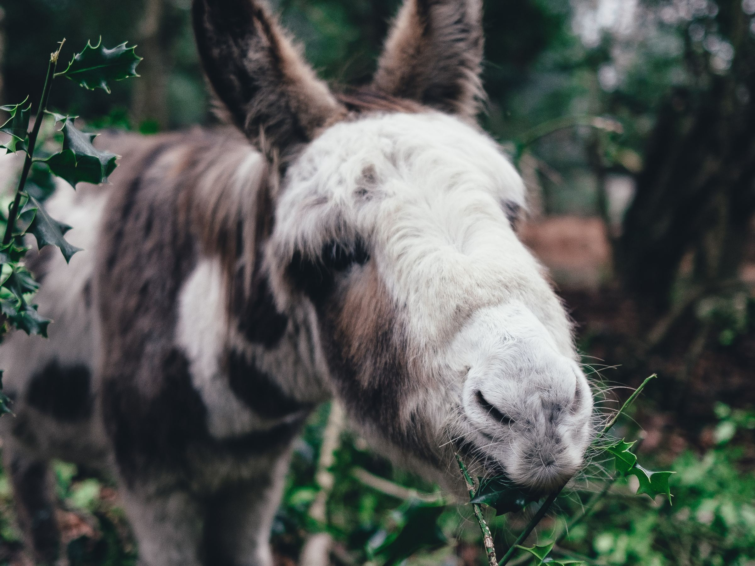 More great facts about donkeys!