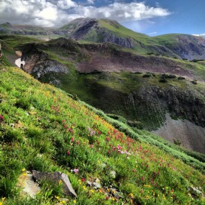 Nothing says summer like wildflowers in the San Juan Mountains.