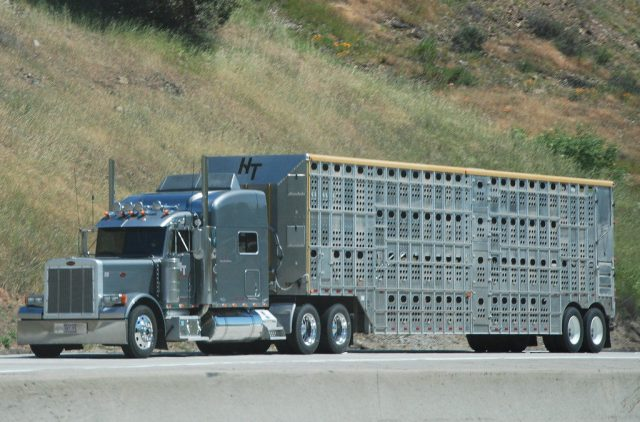 FMCSA Extends Hours-of-Service Emergency Declaration for Livestock Haulers