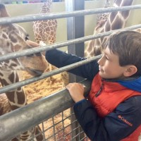 Top 5 Experiences at Colorado's Cheyenne Mountain Zoo