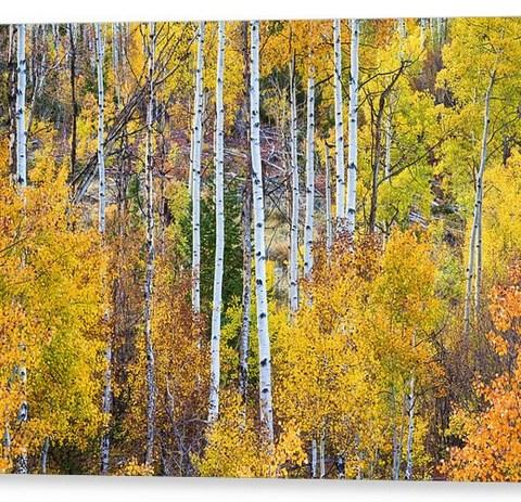 Aspen Tree Magic Canvas Print
