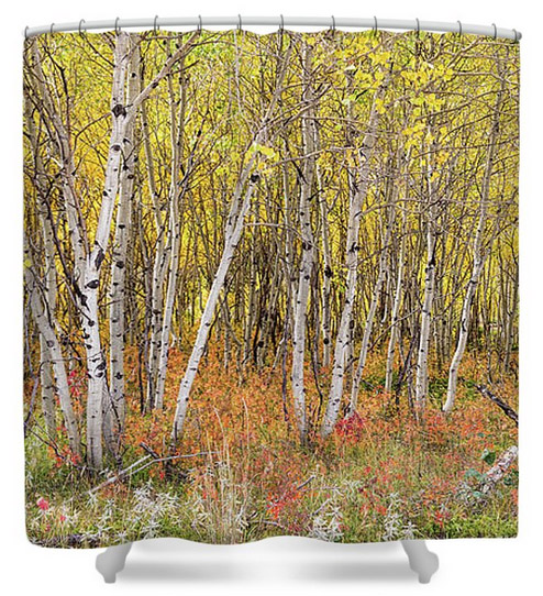 Colorful Aspen Tree Forest Bed Panorama View Shower Curtain