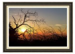 Forest Branches In The Sunset Light Framed Print