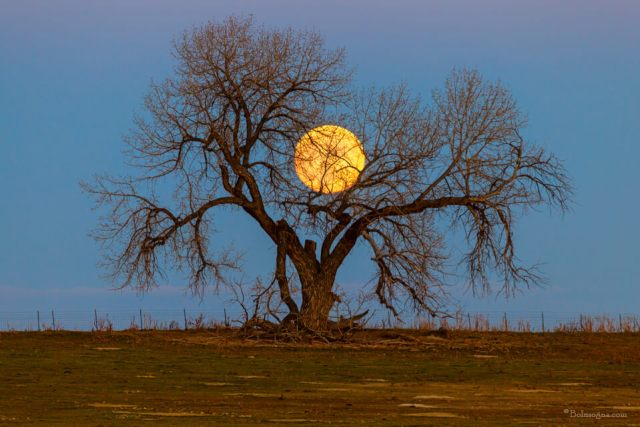 November Supermoon Tree