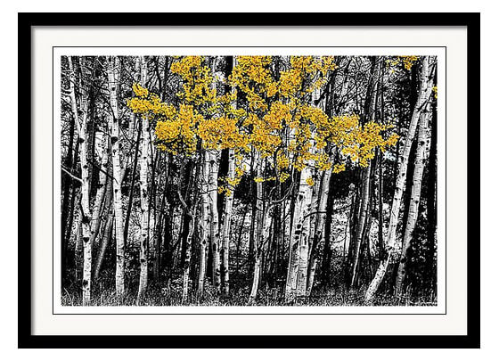 Aspen Touch Of Orange Framed Print - Custom Framed Prints