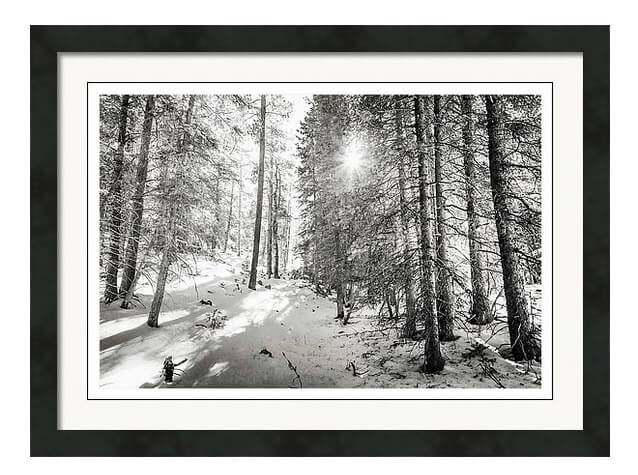 Winter Sunshine Forest Shades Of Gray Framed Print