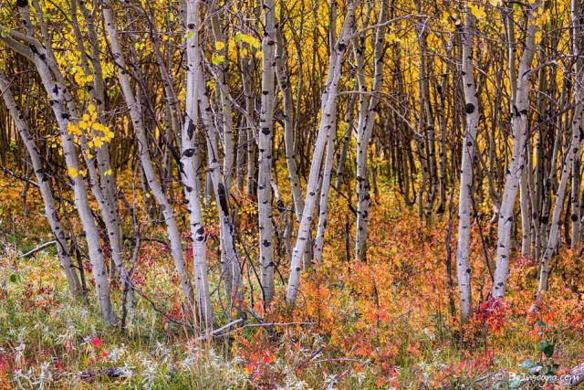 Colorful Woods Wonderland Fine Art Prints
