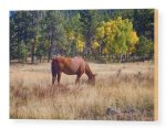 Autumn High Country Horse Grazing Wood Print
