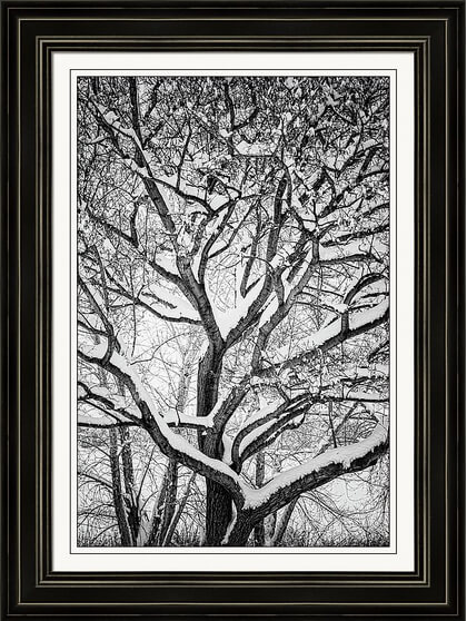 Snowy Trees Winter Intertwine framed prints