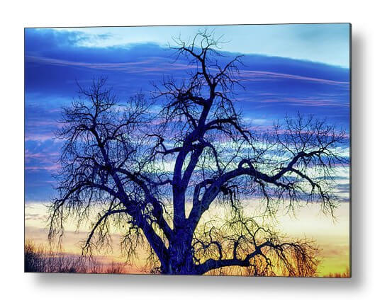 Morning Blues Metal Print
