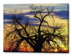 Morning Woods Canvas Print